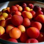 Forbidden fruit explains why I've been quiet