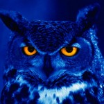 Flight of the night owl